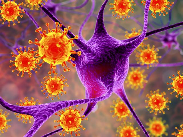 Viruses infecting neurons